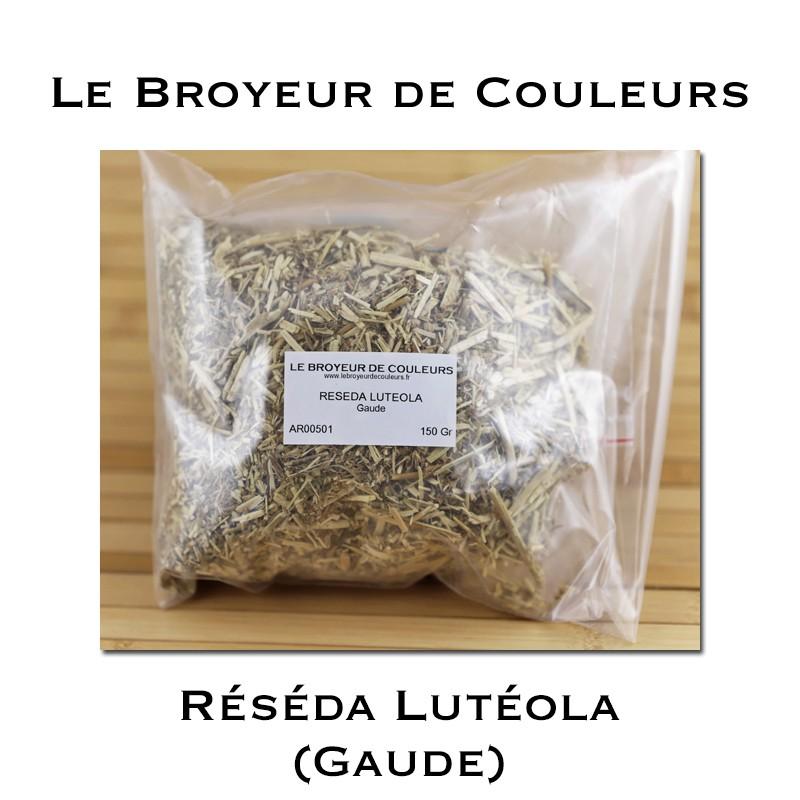 Réséda Lutéola (Gaude)