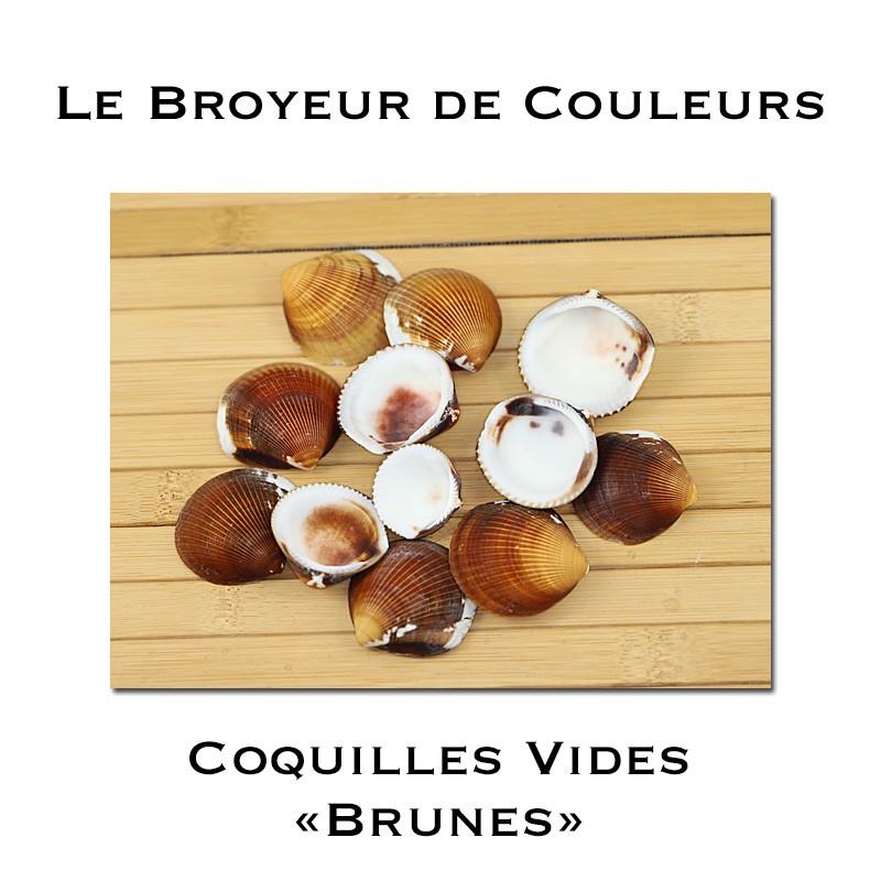 Lot de Coques Vides - Brunes